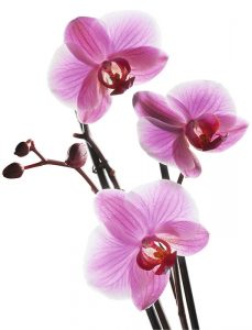 Orchidee-201020431140